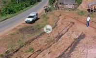 Planting for slope protection